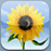 iOS 6 Photos app icon--a sunflower in front of a blue sky
